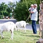 Pokaz dojenia kozy - Festiwal z Natury 2013